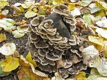 Hölzerne Pilze auf einem Baumstumpf Herbst Lizenzfreie Stockbilder