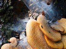 Hölzerne Pilze und Spinnen Lizenzfreie Stockfotografie