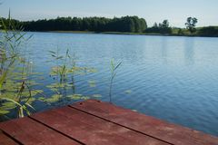 Hölzerne Planke Browns mit kleinem Mädchen und Pelzhund gegen blauen Himmel und Wasser und grüner Wald und Schilfe Stockbild