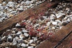 Hölzerne Planken des Bahngleises schließen oben Lizenzfreies Stockbild