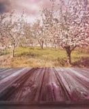 Hölzerne Planken mit Apfelgarten im Hintergrund Stockfoto