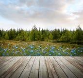 Hölzerne Plattform mit Bäumen des Waldes und Blumen Lizenzfreies Stockfoto