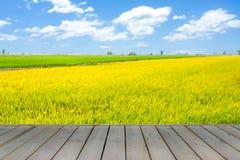 Hölzerne Plattform mit schönem Farbreis archivierte im blauen Himmel Lizenzfreie Stockbilder