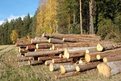 Hölzerne Protokolle am Rand des Herbst-Waldes Stockfoto
