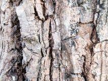 Hölzerne Schale vom wilden Baum Stockbild