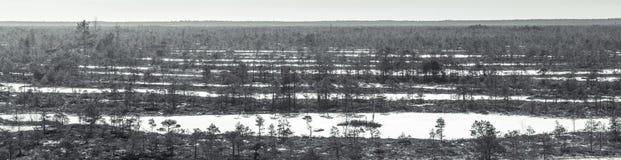 Hölzerne Spur, die durch einen gefrorenen Sumpf in Lettland führt Lizenzfreie Stockfotos