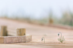 Hölzerne Spur, die führt, um im regnerischen Wetter auf den Strand zu setzen lizenzfreie stockfotos