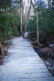 Hölzerne Spur im Wald stockbild