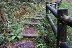 Hölzerne Stammschritte im Herbstwald Stockbild