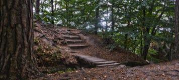 Hölzerne Treppe in einem Wald Stockfotos