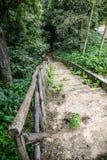 Hölzerne Treppe/Weg durch den Wald Stockfotos