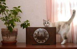 Hölzerne Uhr der Weinlese und eine Katze Stockbild