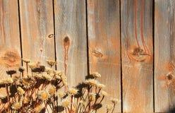 Hölzerne und trockene Blumen Lizenzfreie Stockfotografie