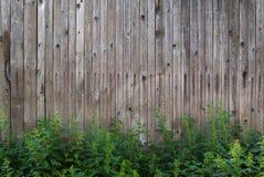 Hölzerne Wand-Beschaffenheit und Hintergrund mit Nesseln lizenzfreies stockfoto