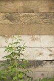 Hölzerne Wand und grünes Blatt lizenzfreies stockfoto
