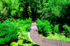 Hölzerne Weg-Kurven-Weise in den Wäldern Stockbilder