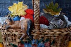 Hölzerne Zahl der Katze und des Tieres im Korb Lizenzfreie Stockfotos