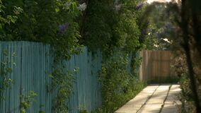 Hölzerner Bürgersteig in einem Landschaftsvideo stock video