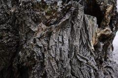 Hölzerner Barken-Hintergrund Alte Baumrinde-Beschaffenheit Stockfoto