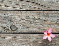 Hölzerner Beschaffenheitshintergrund mit frischer rosa Plumeria- oder Templetree-Blume Stockfoto