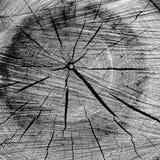 Hölzerner Beschaffenheitshintergrund Natürliche Muster Der hölzerne Beschaffenheitshintergrund Hölzernes Fragment Alte Baumbescha Lizenzfreie Stockfotos