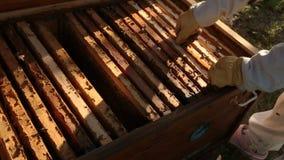 Hölzerner Bienenstock, in dem der Rahmen für Bienenwaben installiert ist Bienen fliegen über den Bienenstock Mädchenimker setzt Z stock footage