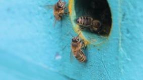 Hölzerner Bienenstock und Bienen stock video footage