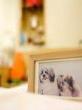 Hölzerner Bilderrahmen von zwei shih tzu Hunden, gerichtet auf das Gesicht des linken Hundes Lizenzfreies Stockfoto