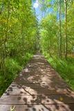 Hölzerner Brückengehweg durch ruhigen Espenwald stockbild