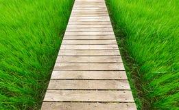 Hölzerner Brückengehweg entlang grünem Reisfeld Stockbild