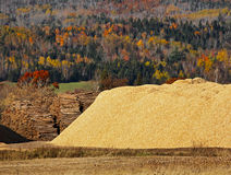 Hölzerner Chips Logs Sawdust Autumn Forest Lizenzfreie Stockbilder