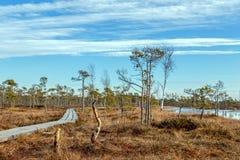 Hölzerner Fußweg auf dem Sumpf mit Herbst farbiger Flora mit schönem Glättungssonnenlicht an der goldenen Stunde, Nordeuropa-Land lizenzfreies stockfoto