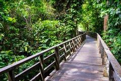 Hölzerner Fußweg im Regen-Wald Stockbild