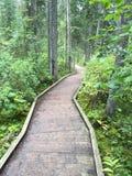 Hölzerner Fußweg im Wald auf Kanadier Rocky Mountains Stockbilder