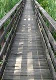 Hölzerner Gehweg in den Schilfen eines naturalistischen Parks 4 stockbilder