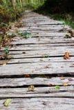 Hölzerner Gehweg führt in ein Holz Stockfoto