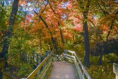 Hölzerner Gehweg im Herbst Stockbilder