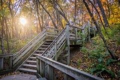 Hölzerner Gehweg im Herbst Stockfotografie