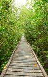 Hölzerner Gehweg im Mangrovewald Stockfoto