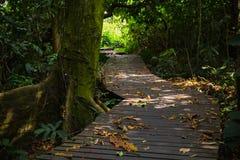 Hölzerner Gehweg im Wald Stockfoto