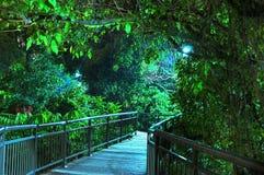 Hölzerner Gehweg mit heller Leuchte hinter Bäumen Stockfotografie