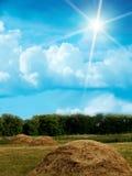 Hölzerner Himmel bewölkt Feld Stockfoto