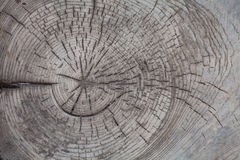 Hölzerner Hintergrund der Baumstammbeschaffenheit Stockfotografie