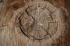 Hölzerner Hintergrund der Baumstammbeschaffenheit Lizenzfreies Stockbild