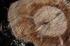 Hölzerner Hintergrund der Baumstammbeschaffenheit Stockbild