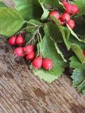 Hölzerner Hintergrund des Herbstes mit Weißdornbeeren Lizenzfreies Stockfoto