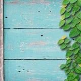 Hölzerner Hintergrund des Schmutzes auf grüner Farbe mit Efeufestlegungs-Baumanlage Stockfoto
