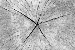 Hölzerner Hintergrund Lichenic: Gebrochener verwitterter Baum-Querschnitt Stockfotografie