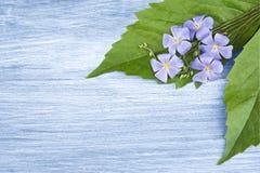 Hölzerner Hintergrund mit blauen Blumen Stockfotografie