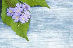 Hölzerner Hintergrund mit blauen Blumen Lizenzfreie Stockfotografie